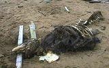 """Bộ xương """"quái vật"""" bí ẩn xuất hiện ở bờ biển nước Nga"""
