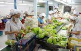 Xuất khẩu rau quả có thể vượt qua lúa gạo