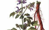 5 vị thuốc quý giúp cải thiện chứng đau bụng kinh