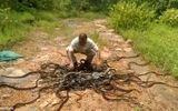 Tay không thả 220.000 con rắn trở về  rừng