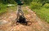 Rợn người cảnh thả hàng trăm con rắn vào rừng