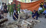 Liên tục bắt giữ các vụ nhập lậu ngà voi về Việt Nam