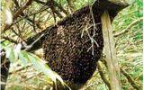 Nam thanh niên bị ong đốt tử vong