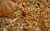 Kinh khủng cảnh buộc nhân viên bán hàng không đủ doanh số nuốt sâu bọ sống