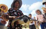 Đồi mồi quý hiếm mắc lưới ngư dân Quảng Nam