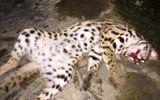 Kiểm lâm truy tìm người giết mèo quý rồi đăng lên facebook