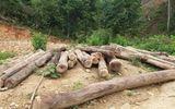 Xử phạt  Phó giám đốc văn phòng đăng ký sử dụng đất tiếp tay phá rừng