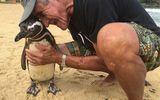 Mỗi năm chú chim cánh cụt vượt 8000km để thăm ân nhân cứu mạng