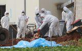 Dịch cúm gia cầm khiến Hàn Quốc có thể mất 1 tỷ USD