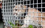 Người đàn ông dũng cảm đấm vào mặt báo sư tử để cứu chó cưng