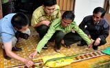 Bình Định: Hàng chục người bị rắn lục đuôi đỏ cắn nhập viện