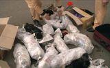 Bắt giữ 3 đối tượng buôn bán, vận chuyển trái phép động vật hoang dã