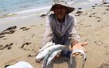 Ô nhiễm biển miền Trung không có trong 10 sự kiện tài nguyên và môi trường 2016