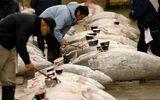 Cá ngừ vây xanh được ông chủ Nhật Bản mua hơn 14 tỷ đồng