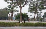 Cho dân chặt cây xanh, một chủ tịch phường ở Hải Phòng bị kỷ luật