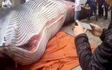 Cá voi 8 tấn bị công ty Trung Quốc xẻ thịt làm quà Tết gây sốc
