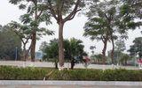 Điều chuyển công tác chủ tịch phường cho dân chặt cây xanh ở Hải Phòng