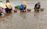 Ngao chết hàng loạt ở Thanh Hóa: Phát hiện mẫu chất thải độc hại