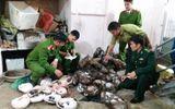 Bắt thêm khối lượng lớn động vật hoang dã tại tư gia đầu nậu