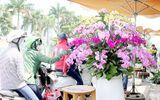 """Hoa kiểng, trái cây chơi Tết """"độc, lạ"""" ngập tràn ở TP. Hồ Chí Minh"""