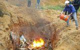Lào Cai: Thu giữ và tiêu hủy hơn 1,3 tấn cá tầm nhập lậu