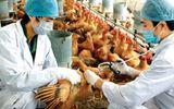 Chặn dịch cúm gia cầm từ Trung Quốc: Cấm hoàn toàn gia cầm qua biên giới