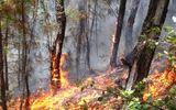 Cháy khu vực thảm thực vật ở Hải Phòng, 1 người thiệt mạng
