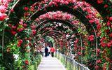Du khách thất vọng vì lễ hội hoa hồng Bulgaria không như quảng cáo
