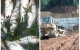 Vỡ đập chứa bùn thải khiến cá chết hàng loạt: Đình chỉ hoạt động xí nghiệp thiếc