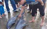 3 con cá heo mắc lưới ngư dân Hà Tĩnh sau lễ cầu ngư