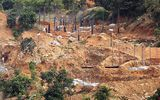 Xác minh thông tin bán đảo Sơn Trà bị đào xới