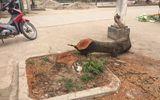 Hà Nội cấm không tự ý chặt cây xanh khi dẹp vỉa hè