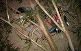 Chặt cây bất cẩn, đè trúng 3 học sinh