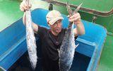 Ngư dân Hà Tĩnh trúng mẻ cá thu 2 tấn bán được hàng trăm triệu