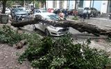 Hà Nội: Nhiều cây xanh bị đổ vì không có rễ