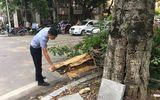 Hà Nội: Cây xanh bất ngờ đổ gục, hàng chục người đứng chờ đèn đỏ thoát nạn