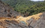 Vụ hủy hoại 63ha rừng tại Đắk Nông: 4 kiểm lâm bị đình chỉ công tác