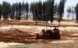 Tạm dừng dự án phá rừng phòng hộ làm sân golf ở Phú Yên