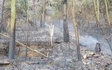 Nguyên nhân ban đầu vụ cháy rừng phòng hộ ở Sóc Sơn