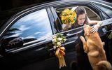 Xúc động hình ảnh chú chó chạy theo xe hoa bịn rịn tạm biệt cô chủ trong ngày cưới