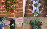 10 ý tưởng trồng cây thẳng đứng tiết kiệm không gian cho nhà chật