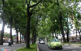Di dời và đốn hạ 258 cây xanh đường Tôn Đức Thắng làm cầu Thủ Thiêm 2