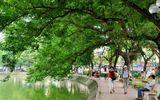 Chủ tịch Hà Nội: Chưa bao giờ Hà Nội nói thay cây xanh Hồ Gươm
