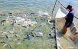 Phải giám sát chặt chẽ cá tra nếu muốn nhập khẩu vào Hoa Kỳ