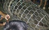 Hà Nội: Bắt được cá sấu nặng 30kg trên sông Tích
