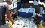 Xác định nguyên nhân khiến cá chết hàng loạt trên sông Chà Và