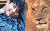 """Fan """"chơi trội"""" tặng G-Dragon một chú sư tử nhân dịp sinh nhật"""