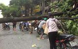 Gió lốc tốc mái gần 800 nhà dân, quật ngã nhiều cây xanh ở Lào Cai