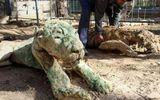 Vườn thú tàn khốc bỏ đói các con thú 90 ngày, chúa sơn lâm cũng biến thành xác khô