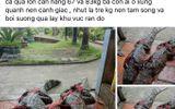 Người đăng tin thất thiệt bắt được cá sấu 83kg ở Cà Mau bị phạt 10 triệu đồng